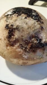Moldy Coconut Insides